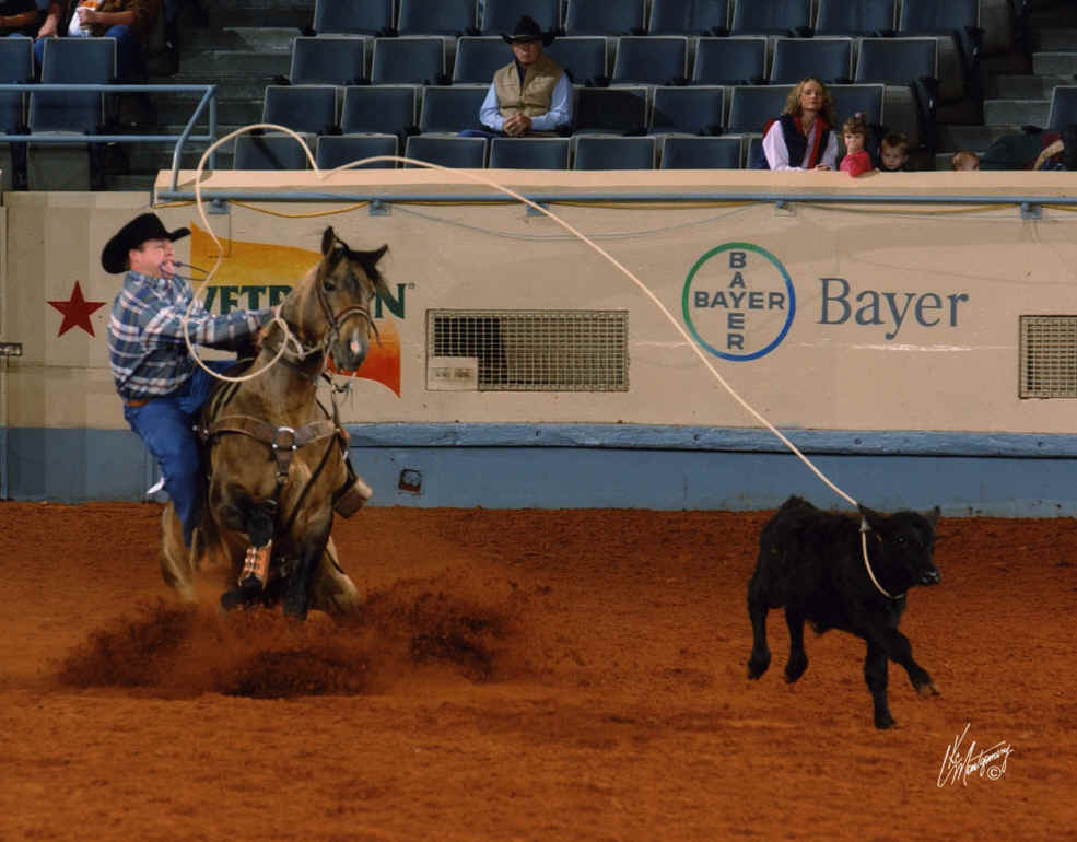 Calf Roping Wallpaper of sr Calf Roping at